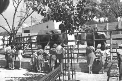 כלוב הפילים בגן החיות