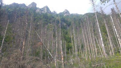 יערות בהרי הטטרה - סלובקיה