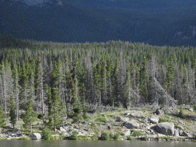 יער בהרי הרוקי - קולרדו