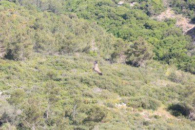נשר בכרמל - לא יער